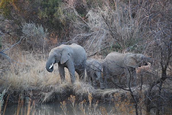 国立公園で象に遭遇