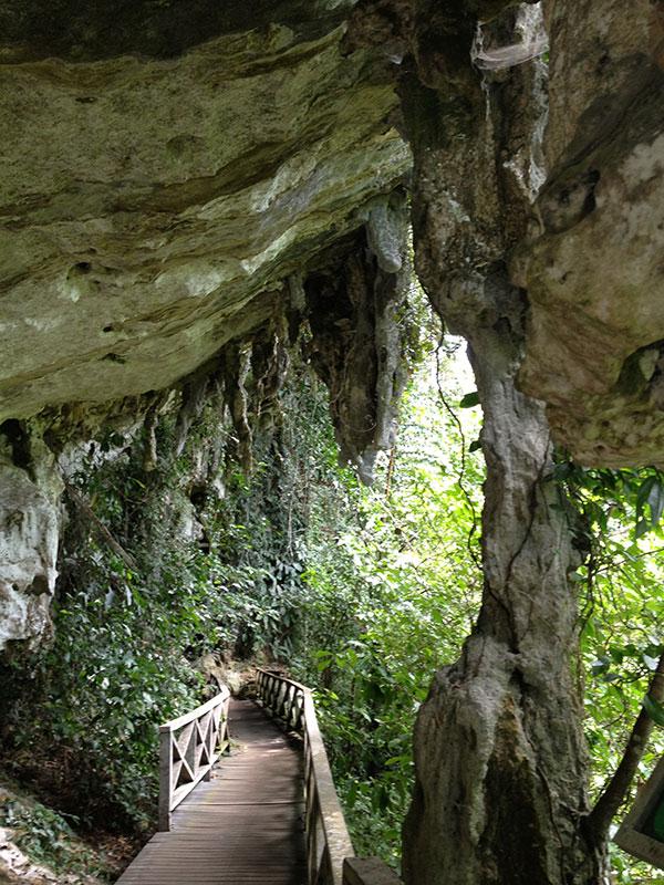 洞窟に着くまで森の中の道を歩きます